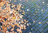 Leaves on pavement — Stock Photo