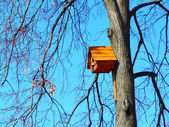 Beautiful wooden birdhouse feeder (nesting box) for birds hanging on a tree — 图库照片