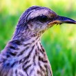 Stock Photo: Bird profile
