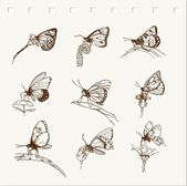 Hand drawn butterfly collection — Stock Vector