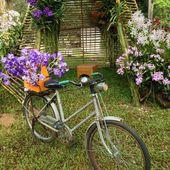 Orchidea e bicicletta — Foto Stock