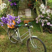 Orchidea i rowerów — Zdjęcie stockowe
