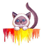 Drawing watercolor cute siam cat on white background with abstract colorful drips — Stock Photo
