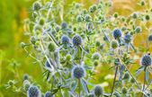 Wild prickly plant — Foto de Stock