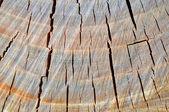 Texture of wood — Stock Photo