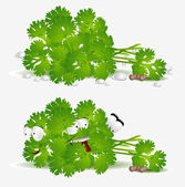 Fresh coriander character — Stock Vector