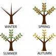 Tree in four seasons — Stock Vector #37776995
