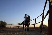 Rider at sunset — Stock Photo