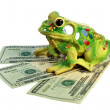 Toad and dollars — Stock Photo