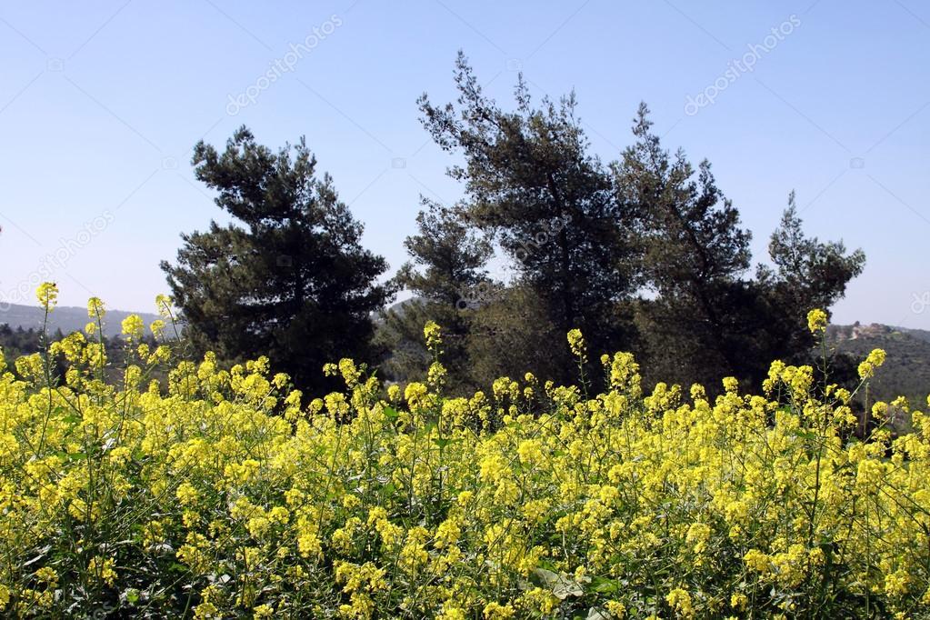 春天风景 — 图库照片08iropa#36104453