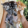 Kittens — Stock Photo #36139695