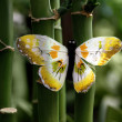 Stock Photo: Butterfly and bamboo