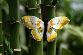 Butterfly and bamboo — Stock Photo