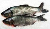 Atlantic Salmon — Stock Photo