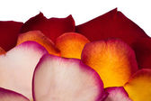 玫瑰花瓣的背景 — 图库照片