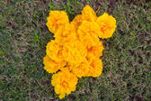 Yellow Silk Cotton Tree, Yellow Cotton — Photo
