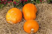 Giant pumpkin — Stock Photo