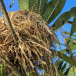 Nest on the tree, nests made of grass. — Stock Photo #50250811