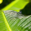 Dewdrops on a green leaf. — Stock Photo