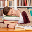 Sleeping at the library.  — Foto Stock