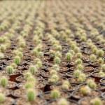 Sea of cactus. — Stock Photo #45020505