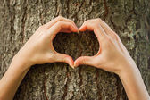 Hands gesturing heartshape on the tree — Stock Photo