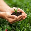 Hands holding green plant — Stock Photo #46177045