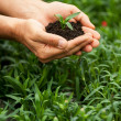 Hands holding green plant — Stock Photo #46177047