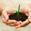 Hands holding green plant — Stock Photo #46177049