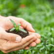 Hands holding green plant — Stock Photo #46177059