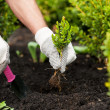 Hands in glovers holding green plant — Stock Photo #46177065