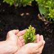 Male hands holding green plant — Stock Photo