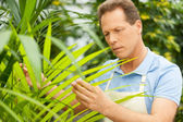 Man working with plants. — Stock Photo