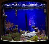 Growing coral in aquarium — Stock Photo