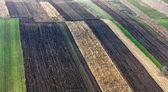 Crops from up above — Stock Photo