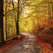 Foto Stock: Forrest alley of leafage