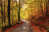 Forrest alley of leafage — Stockfoto
