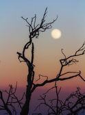 Leafless branch at sunset — Foto de Stock
