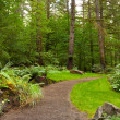 Stock Photo: Manicured Garden Path