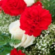 Red and White Carnations — Stock Photo #37081049