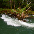 Sweeper River Snag — Stock Photo #37083257