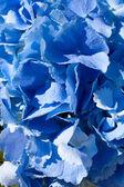 Wedding Flower Abstract — Stock Photo