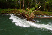 Sweeper River Snag — Stock Photo