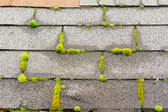 Moss on House Roof — Stock Photo