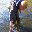 Stockfoto: Rainbow Trout Catch Release