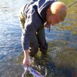 Rainbow Trout Catch Release — Stock Photo