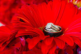 Wedding Rings and Red Flowers — Stockfoto