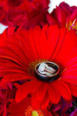 Wedding Rings and Red Flowers — 图库照片