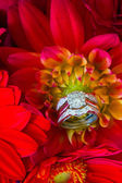 Wedding Rings and Red Flowers — Stock Photo