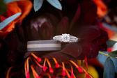 Wedding Rings on Flower — Stock Photo